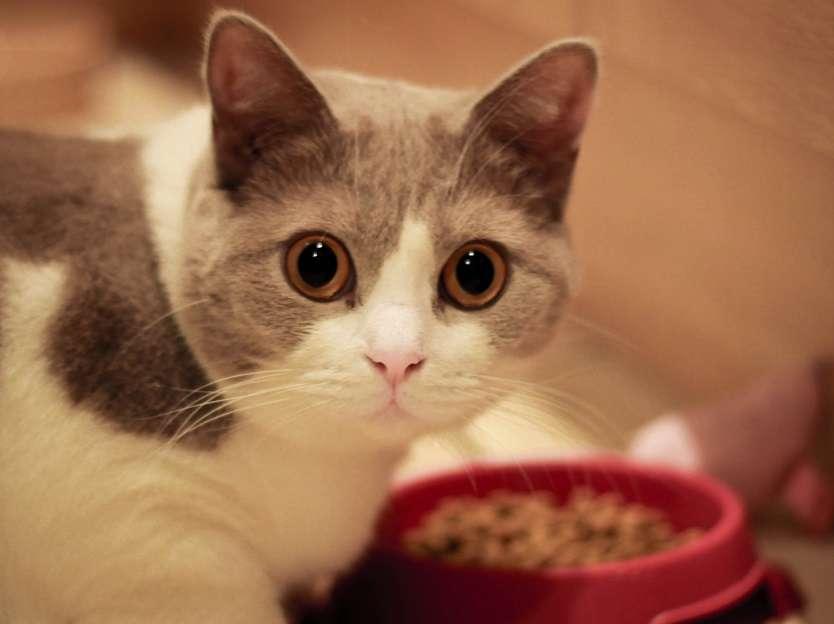 gambar kucing tidak mau makan, via : petbucket.com