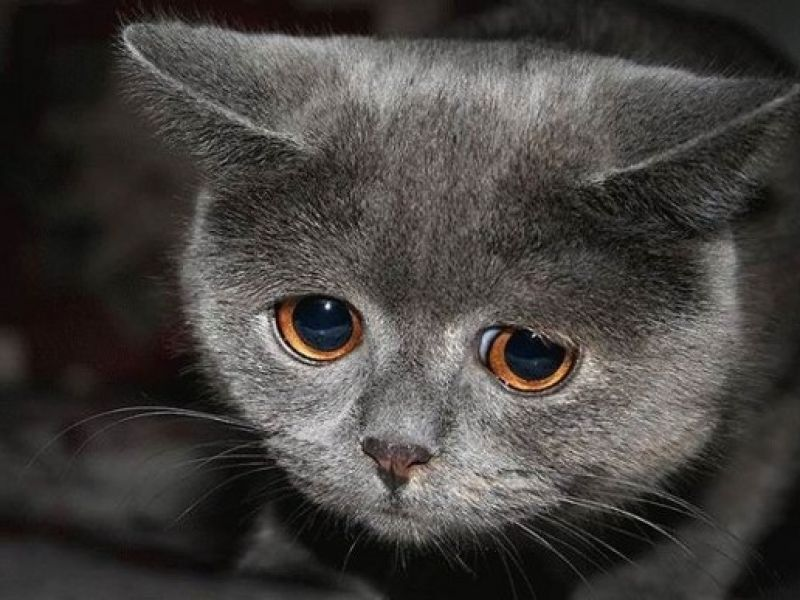 Cara Mengatasi Sakit Flu pada Kucing