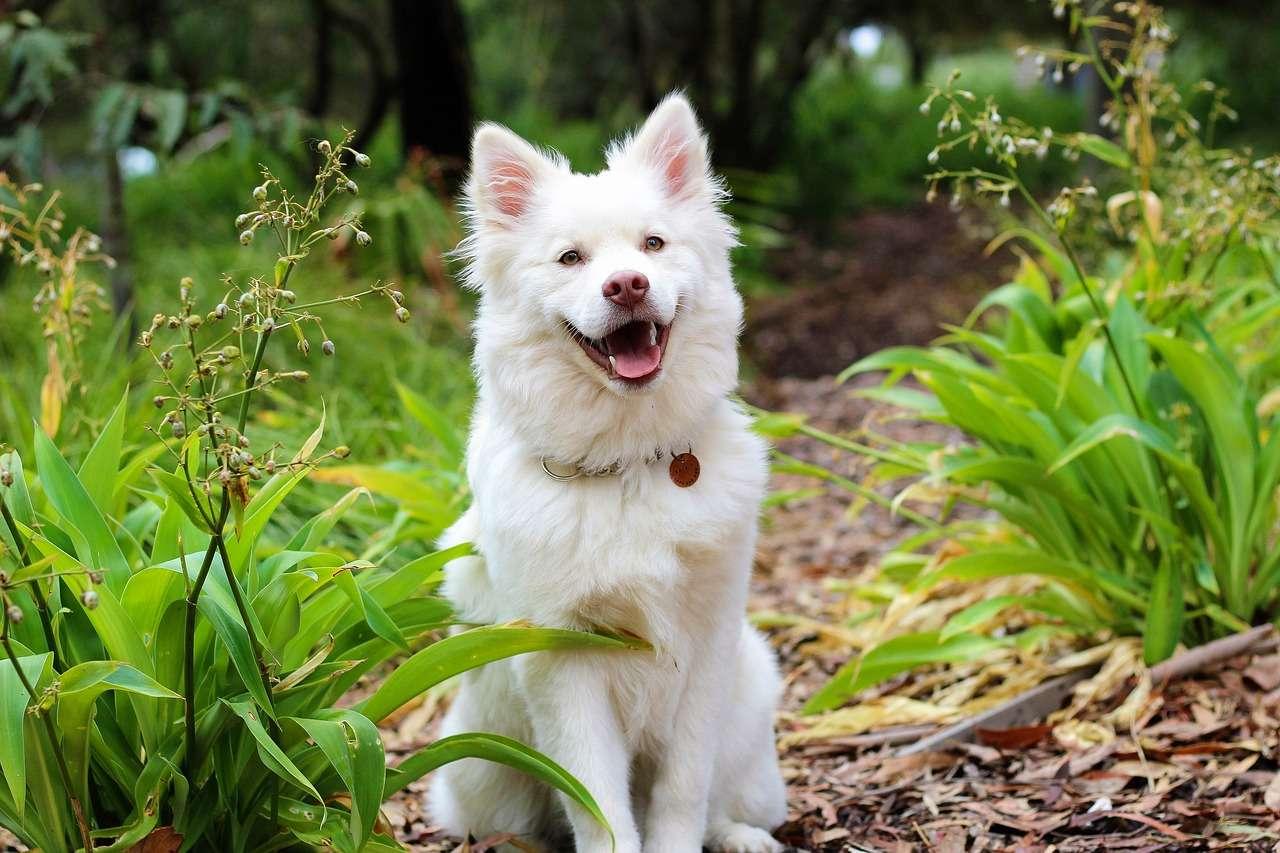 Tips Agar Anjing Tidak Mudah Stres